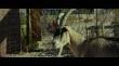 кадры из фильма Goats