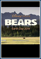 постер Медведи,Bears