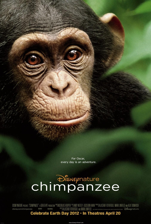 постер Шимпанзе,Chimpanzee