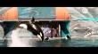 кадры из фильма Ржавчина и кость