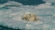 кадры из фильма To the Arctic
