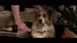 кадры из фильма Darling Companion