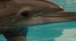 трейлер к фильму Dolphin Tale