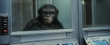 rise_of_the_planet_of_the_apes-0-00-10-203
