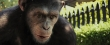 rise_of_the_planet_of_the_apes-0-01-15-475