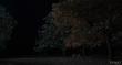 кадры из фильма Странная жизнь Тимоти Грина
