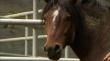 кадры из фильма Дикий конь, дикая скачка