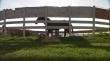 кадры из фильма Wild Horse, Wild Ride